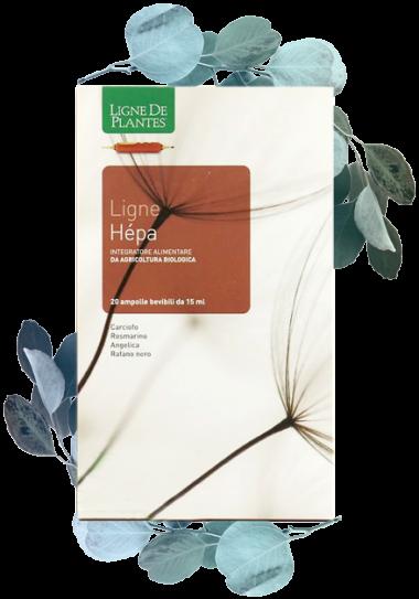 ligne_de_plantes_hepa3